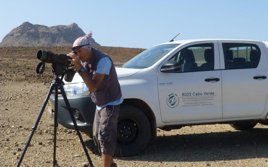 SAIAK contribue à l'étude et à la conservation du Vautour percnoptère au Cap Vert
